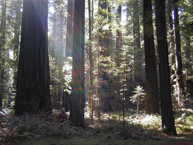 A Walk In The Woods Test – Relational Psychology Test